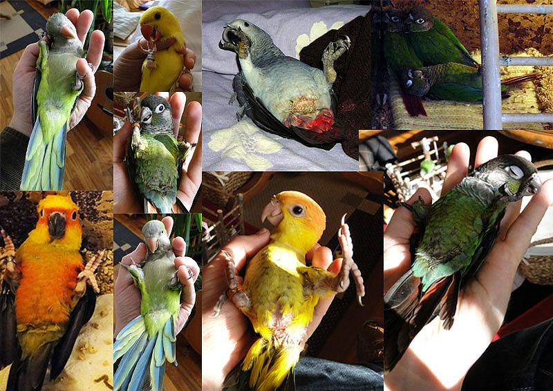 papegaaienschool